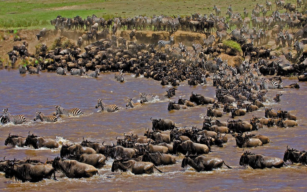 Wildebeest & Zebra Migration (horizontal)