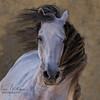 Ruben de la Terquedad , Stallion, Haras de la Terquedad, France