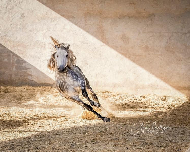 Remojon Terquedad, PRE Stallion, Haras de la Terquedad, France