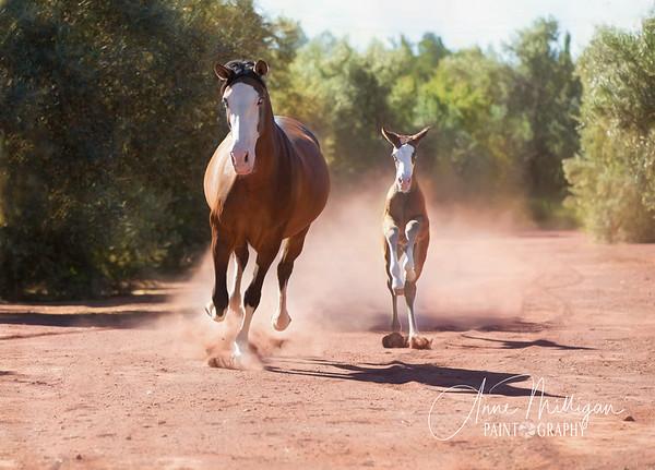 PRE Mare and Foal, Yeguada Sierra de la Espada, Murcia Spain
