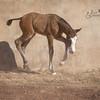 PRE Foal, Yeguada Sierra de la Espada, Murcia Spain