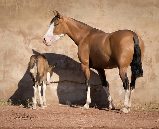 PRE mare Laurel GT and foal, Yeguada Sierra de la Espada, Murcia Spain