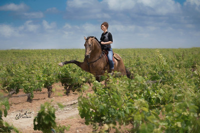 Clémence Faivre and her fabulous Lusitano Stallion Fuego FG in a vineyard  near Jerez, Spain