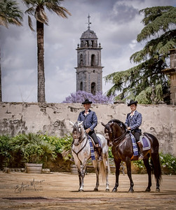 PRE Stallions from Yeguada de la Cartuja, Jerez, Spain