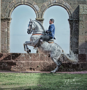 """""""For one to fly, one needs only to take the reins."""""""