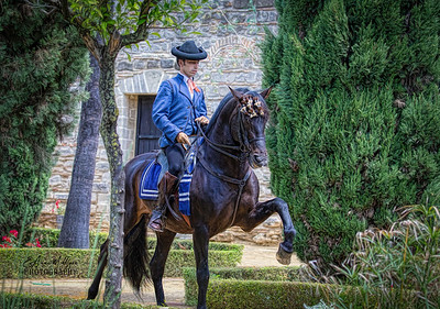 PRE Stallion from Yeguada de la Cartuja, Alcazar,  Jerez, Spain