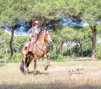 Clémence Faivre and her fabulous Lusitano Stallion, Fuego FG,  near Jerez, Spain