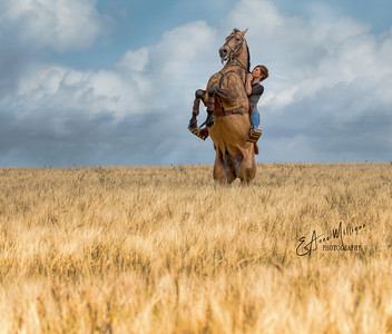 """In riding a horse, we borrow freedom."" H Thompson"