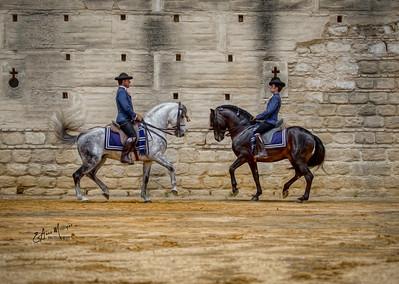 PRE Stallions from Yeguada de la Cartuja, Alcazar,  Jerez, Spain