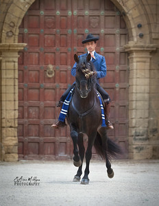 PRE Stallion from Yeguada de la Cartuja, Cartesian Monastery,  Jerez, Spain