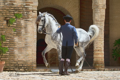 PRE Stallion and handler from Yeguada de la Cartuja, Jerez, Spain