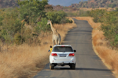 Pilanesberg National Park, South Africa