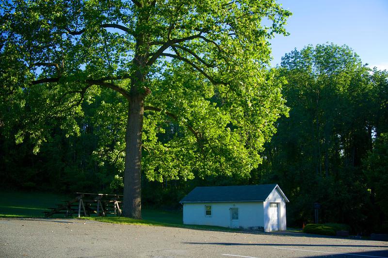 Big round tree-<br />  DSC 2487