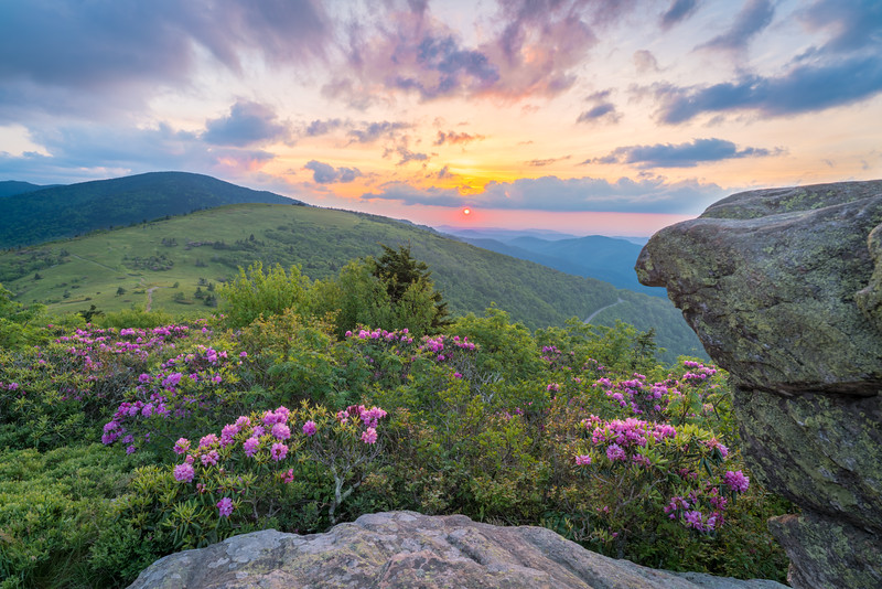 Roan Mountain Splendor || Roan Mountain, TN