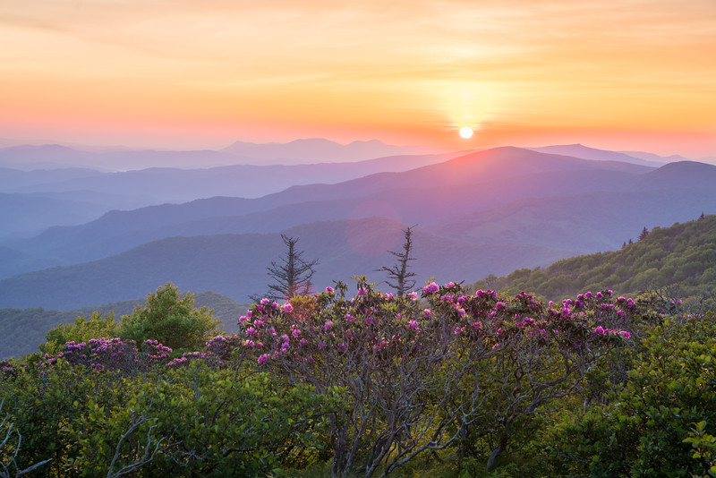 Roan Sunrise || Roan Mountain, TN