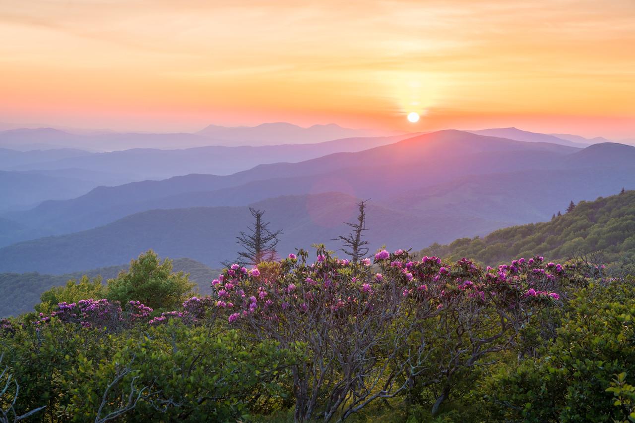 Roan Sunrise || Roan Mountain, TN