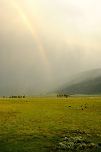 Rain and Rainbow in Lamar Valley Yellowstone National Park