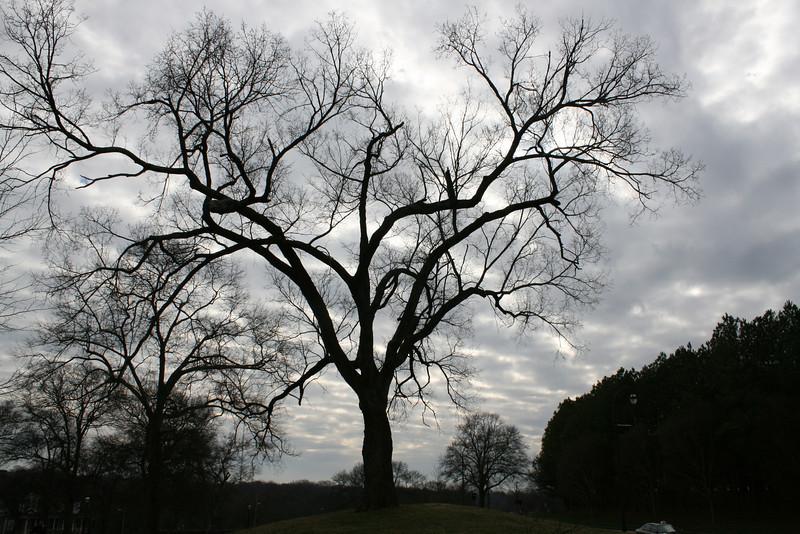 Tree on Freedom Parkway, Atlanta, Ga