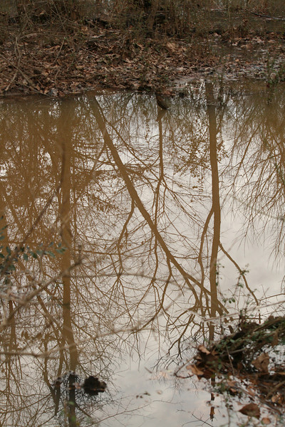 Big Creek Greenway, Alpharetta, Ga