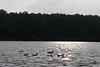 On Murphey Candler lake