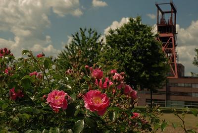 Blumen und Zeche
