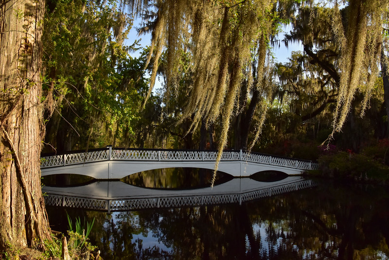 """Magnolia Plantation Bridge"""