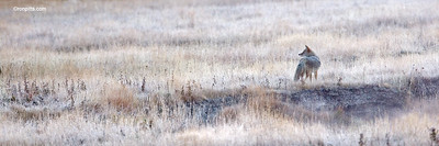 FROSTED MEADOW