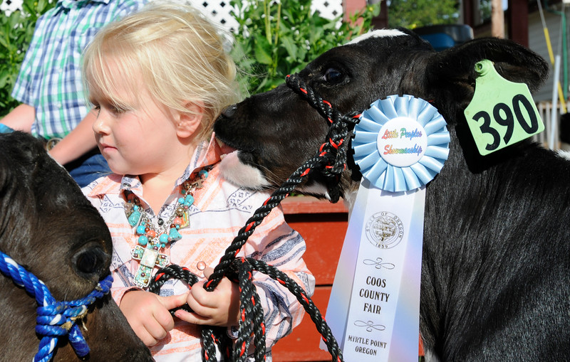 A calf nibbles on the shirt of Henley Reeves, 3, after competing in a showmanship class during the first day of the Coos County Fair in Myrtle Point, Ore. on Tuesday, July 25, 2017.