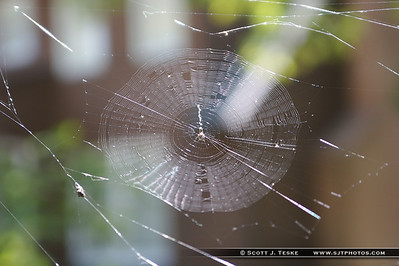 web catches light