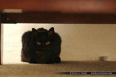 Vikki's Cat