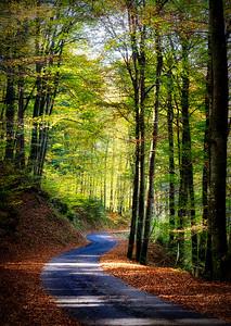 Tree Curves Ahead