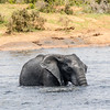 EASTERN CAPE. ADDO ELEPHANT NATIONAL PARK. LITTLE ELEPHANTS PLAYING IN THE WATER.