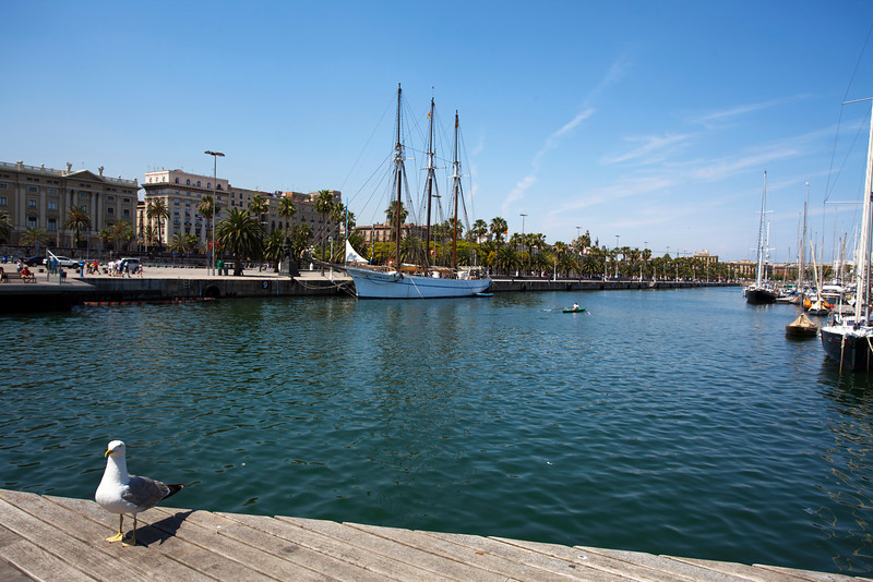 BARCELONA [BCN]. HARBOUR WITH SEAGULL.