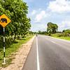 NEGBOMBO TO ANARADHAPURA. SRI LANKA. STREET SIGN WITH ELEPHANT. [2]