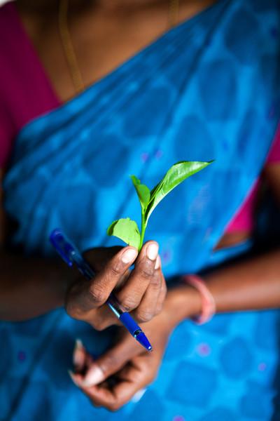 GLENLOCH TEA FACTORY. NUWARA ELIYA. HILL COUNTRY. SRI LANKA.