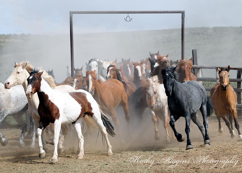 Horse Drives