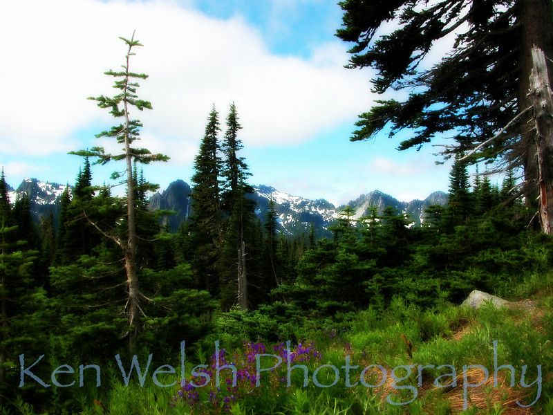 """The Color Purple""<br /> <br /> Mount Rainier National Park <br /> © Copyright Ken Welsh"