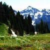 """Buttercups""<br /> <br /> Mount Rainier National Park<br />  © Copyright Ken Welsh"