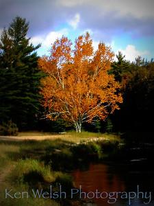 """Tree of Gold""    © Copyright Ken Welsh"