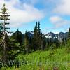 """The Naked Tree""<br /> <br /> Mount Rainier National Park <br /> © Copyright Ken Welsh"