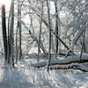 """Winter Wonderland""<br /> <br /> © Copyright Ken Welsh"