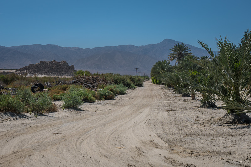 Sandy road between a palm orchard and the desert near Salton Sea