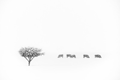 Sanpete Winter. Sanpete County, Utah