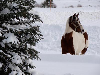 Christmas in Idaho - 00324
