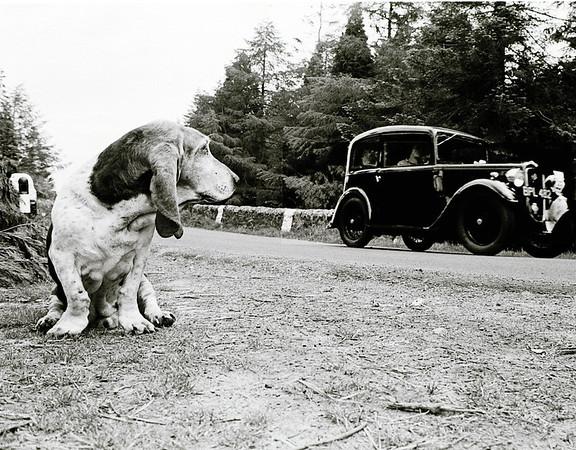 Beamish Rally 1984 - Bloodhound