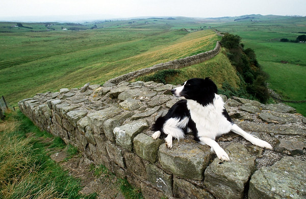 On guard at Hadrian's Wall