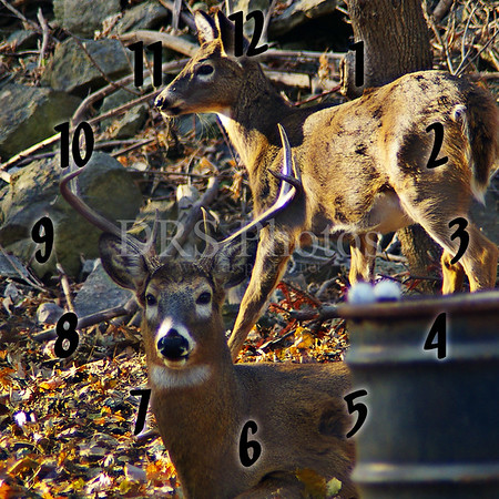 DRS Photos deer Clock