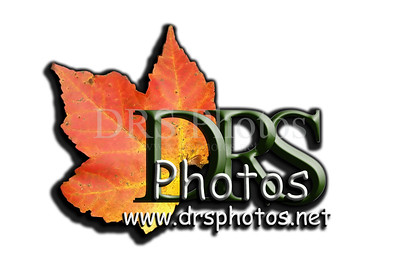 DRS Photos Main Logo