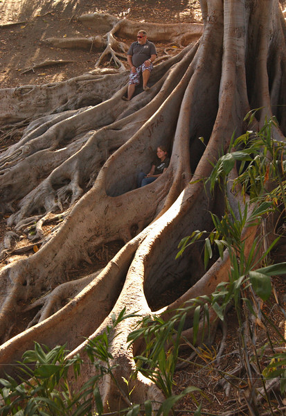 Ivan, & Lydia with roots of Moreton Bay fig tree in ravine - Balboa Park, CA