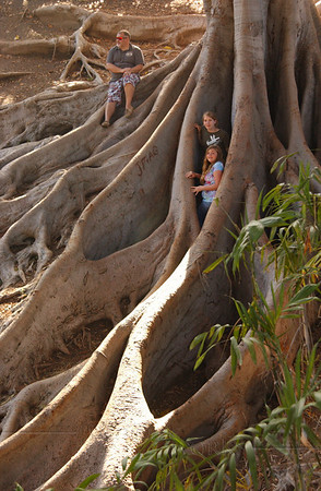 Ivan, Lydia & Kalina with roots of Moreton Bay fig tree in ravine - Balboa Park, CA